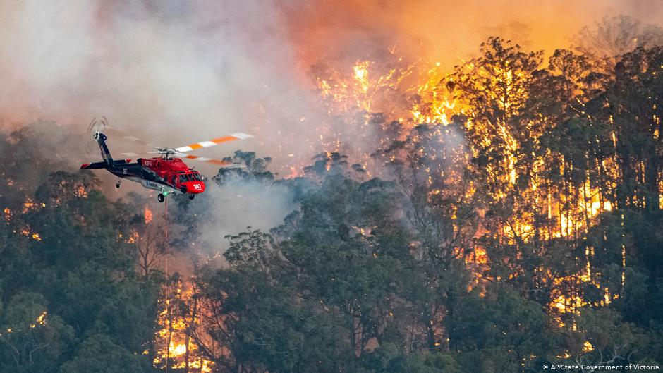New evidence shows forest fires, logging and land clearance are creating an environmental crisis in Australia.