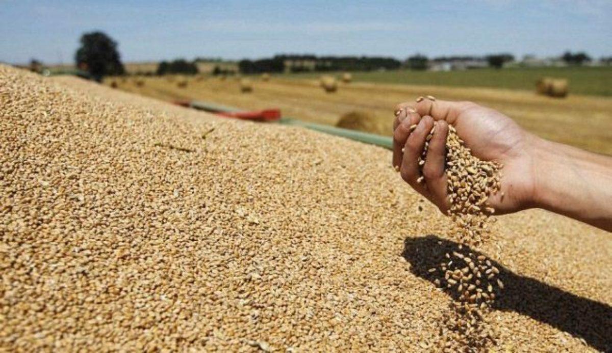 موسم زراعة الحبوب