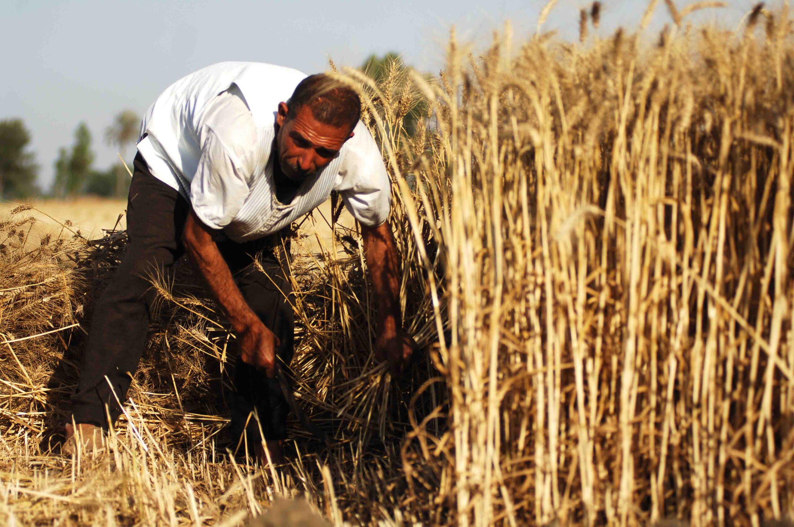 أسعار المحاصيل