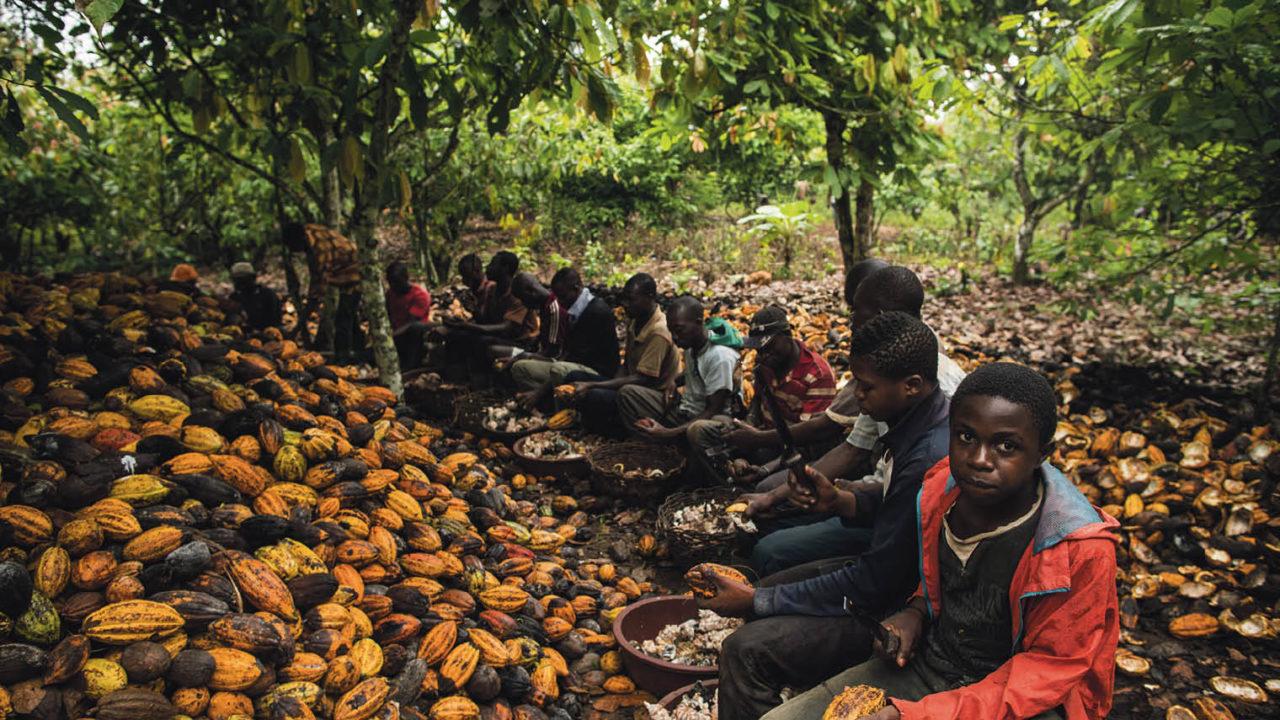 children working on cocoa farm
