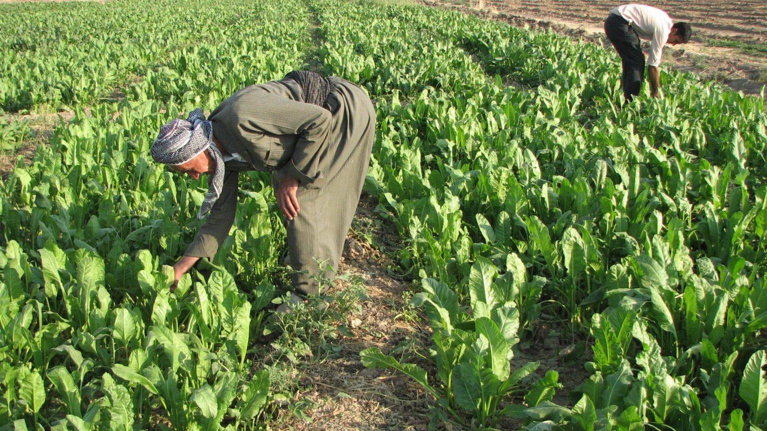Iraqi Food Security