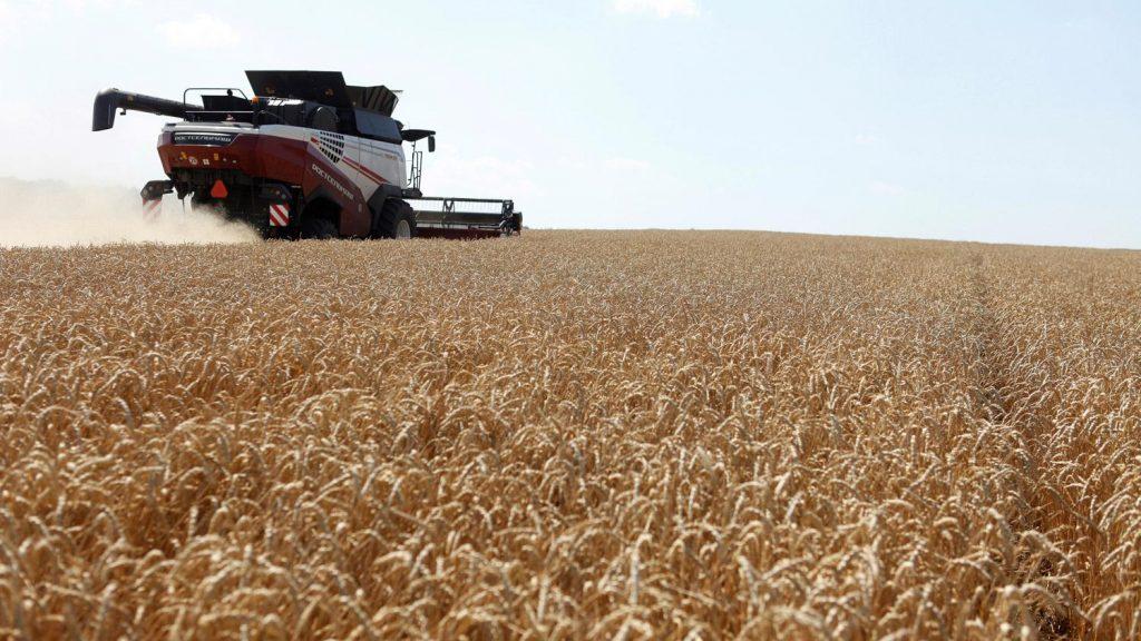 موسم القمح