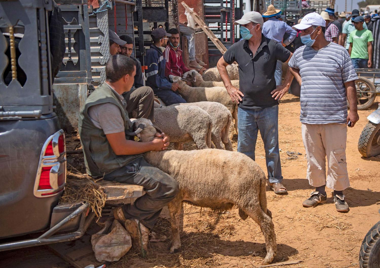 مربو المواشي في المغرب