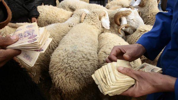 أسعار الأضاحي في الجزائر