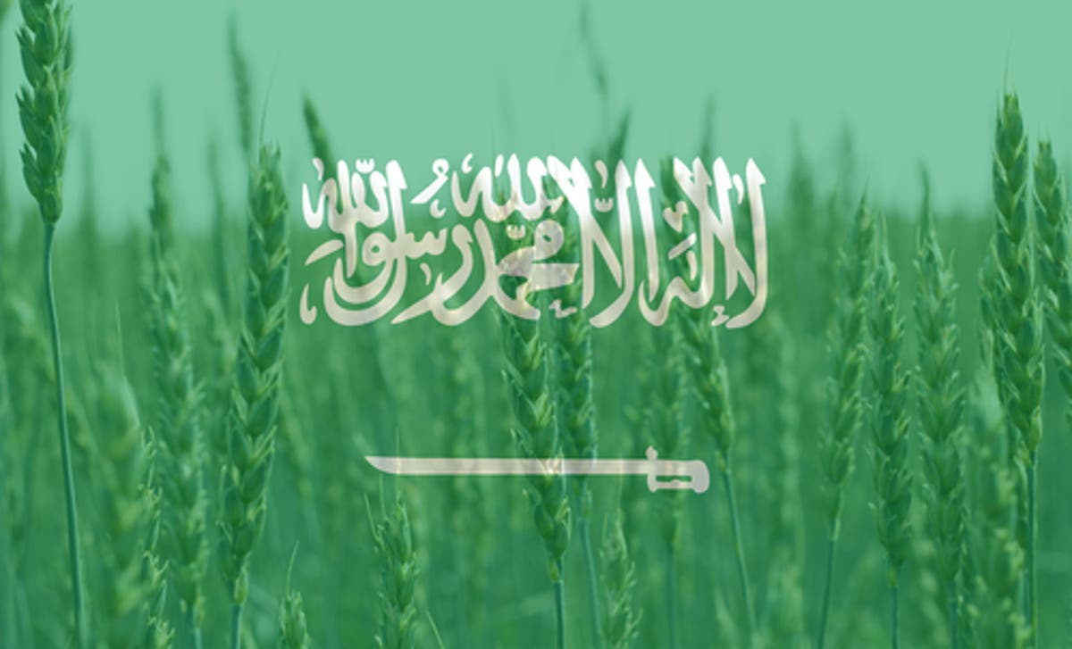 واردات القمح